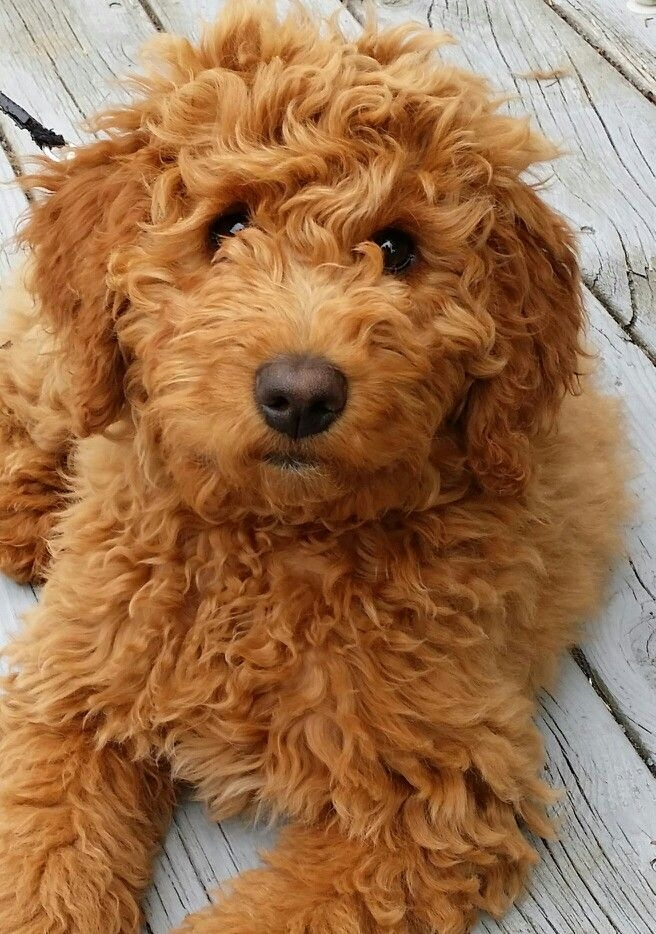 Как правильно выбрать собаку и действительно ли она нужна тебе? - фото №4