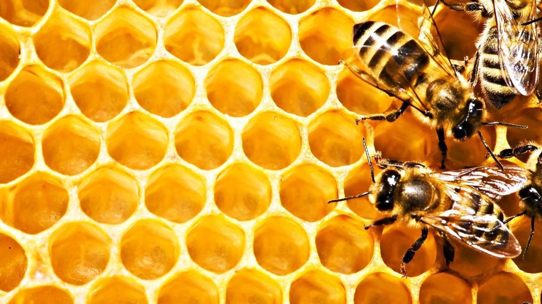 Как умываться медом - фото №1