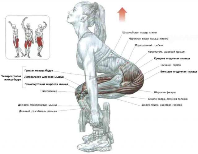 Становая тяга: как правильно делать сложное упражнение (+ВИДЕО) - фото №1