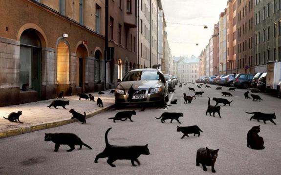 черный кот пятница 13