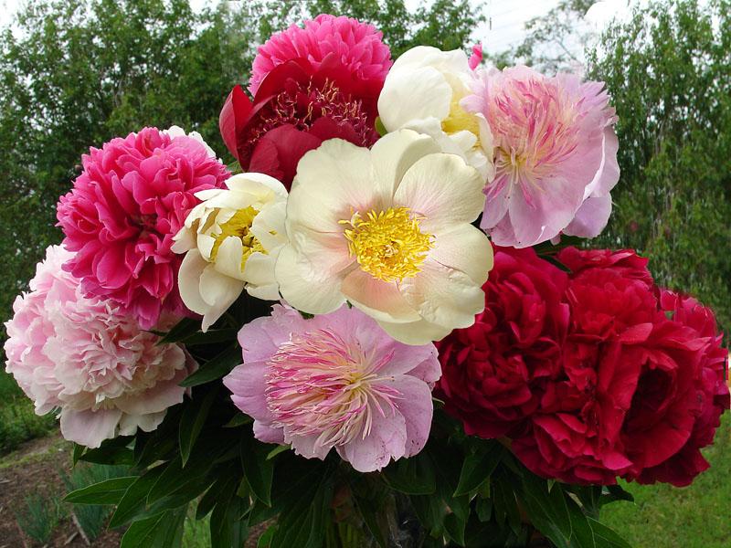 Как признаться в любви с помощью цветов? - фото №4