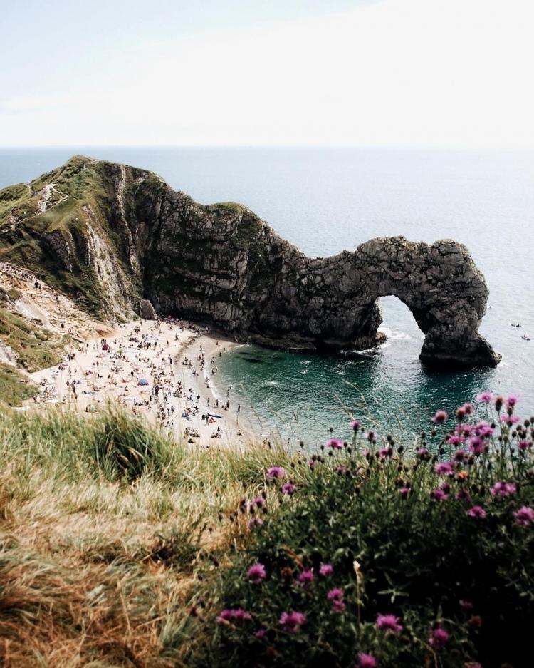 природа горы океан цветы