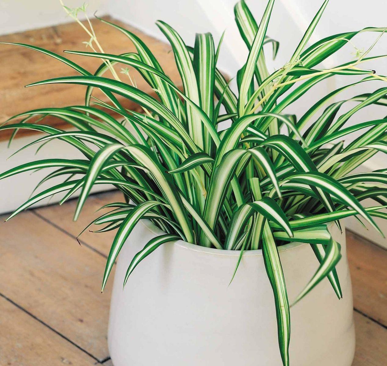 Дышать станет легче: кислородные растения, которые должны быть в доме - фото №1