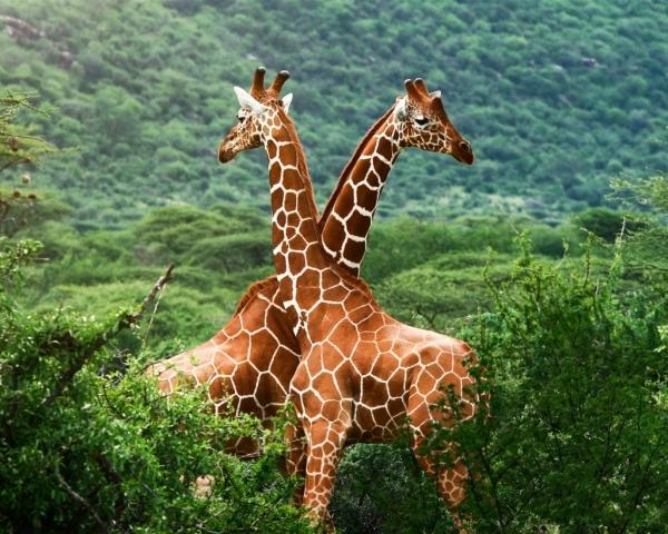 зимбабве туризм