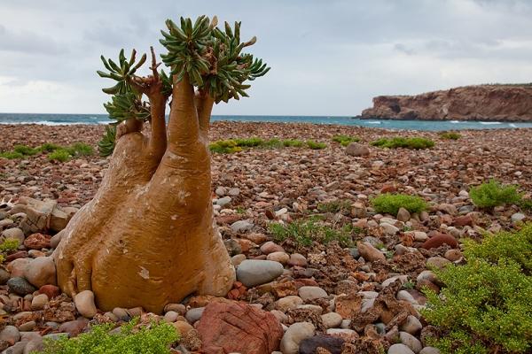 Йемен, остров Сокотра фото