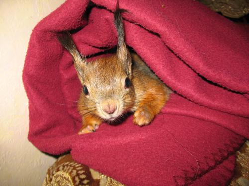 Экзотические животные в доме: млекопитающие - фото №2