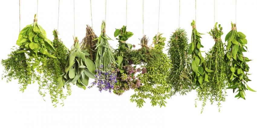 Сезонная зелень и травы мая