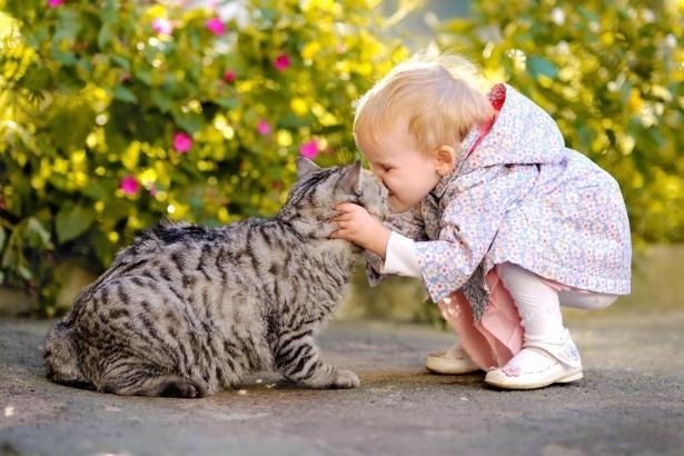 влияние кота на здоровье человека