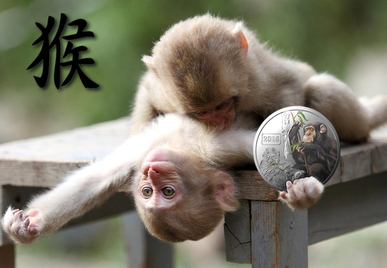 Смотреть сексуальные контакты с обезьянами