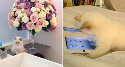 Кто из знаменитостей любит кошек: как живут домашние любимцы звезд (фото) - фото №1