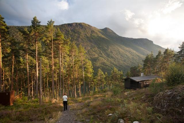 Впервые в мире: в Норвегии официально отказались от вырубки лесов - фото №2