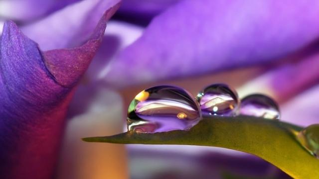 цветок с каплей