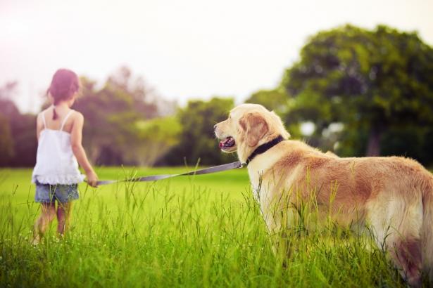 забег с собаками