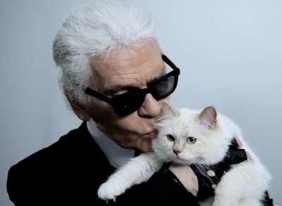 Кто из знаменитостей любит кошек: как живут домашние любимцы звезд (фото) - фото №2