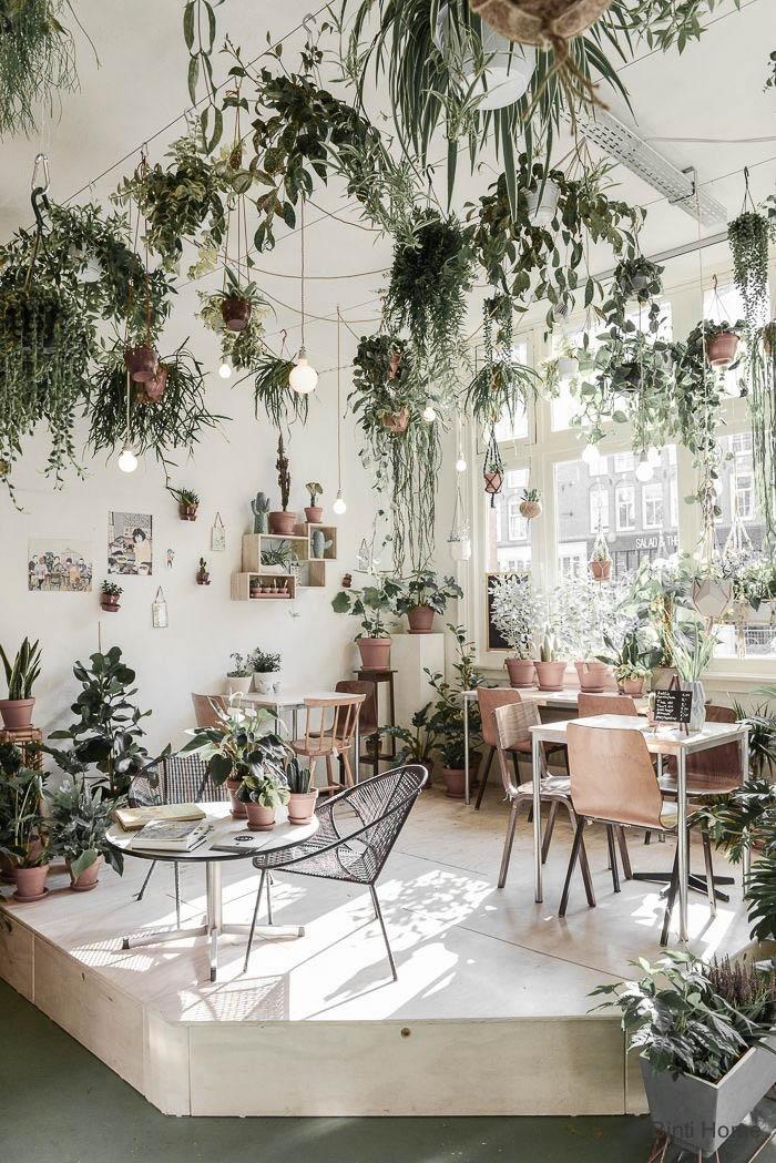 Домашняя оранжерея: выбираем красивые и полезные комнатные растения (очищающие, бактерицидные, увлажняющие) - фото №1
