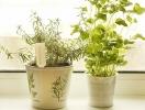 Новинка: горшочки для выращивания специй