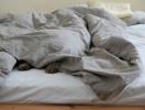 Когда считать овец — не помогает: что делать, если не получается заснуть?