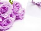 Лучшие смс-поздравления с 8 Марта 2013 теще