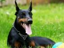 Как правильно тренировать собаку