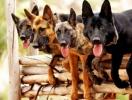 Как выбрать хорошего тренера для собаки