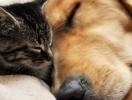 Как и чем кормить беременную кошку или собаку