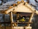 Детское время: делаем кормушки для птиц и животных