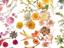 Словарь невесты: выбираем цветы для свадебного букета