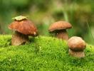 Сбор грибов летом: что нужно знать