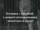Украинцев призывают отказаться от цирков с животными. Петиция