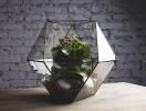 Новая мода на комнатные цветы – флорариумы (где купить и как ухаживать)