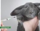 Макияж ценой жизни животных : что такое этичная косметика и где ее искать