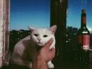 Мяу-мяу нового урожая: выпить вина теперь можно на пару с котом