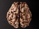 TEDx: почему мы ничего не знаем о важнейшем двигателе нашей жизни – о мозге? (ВИДЕО)