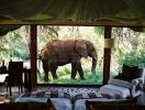 Цена удовольствия: почему животным в цирке не место?