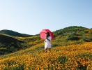 Гороскоп на неделю с 24 по 30 июля: цветы помогут!