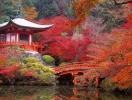 Парады гейш, цветение кленов и сакур: 7 причин посетить Японию в ноябре