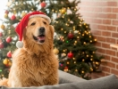 Год Желтой Земляной Собаки: общий гороскоп на 2018 год