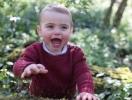 Принцу Луи исполнился годик: новые официальные портреты малыша