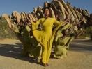 """SPIRIT: Бейонсе презентовала клип на саундтрек к фильму """"Король Лев"""" (ПРЕМЬЕРА)"""