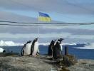 """""""Всем нам стоит сделать свой шаг гуманности"""": в Антарктиде впервые состоится марш за животных"""