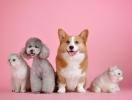 10 трогательных историй о собаках, которые спасли людей