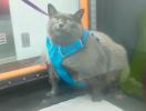 Как именно кошка Шлакоблок обманула тренажер и почему она стала звездой Интернета?