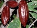 Соблазнительная история шоколада