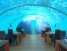 Роскошный обед... на дне Индийского океана