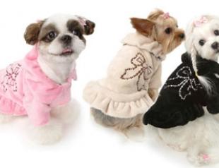 Модные пальто и шубы для собак: что, где, почем