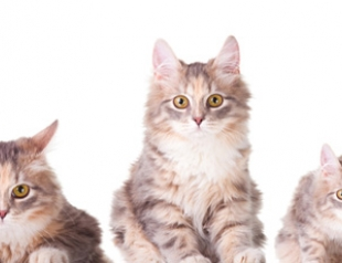 Уход за котами и кошками: главные ошибки