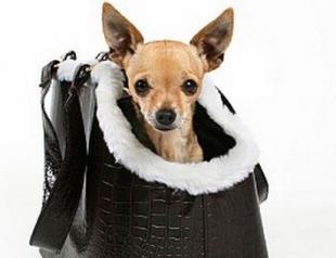 Путешествие с домашним животным: 5 советов