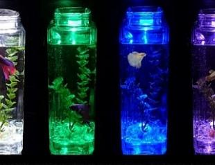 Изобрели самоочищающийся аквариум
