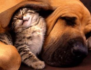 Витамины для кошек и собак: нужны ли они?