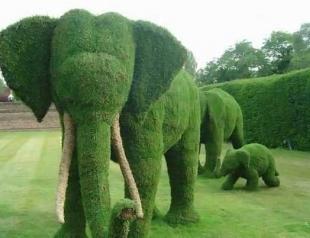 Ландшафтный дизайн: искусство топиари. Фото